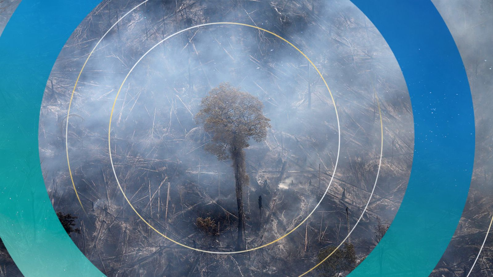 Climate change: Household banks have invested billions in firms involved in deforestation, report claims