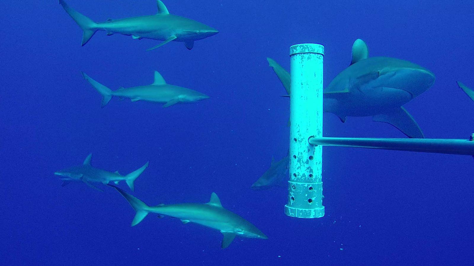 Network of underwater cameras to protect wildlife in UK Overseas Territories