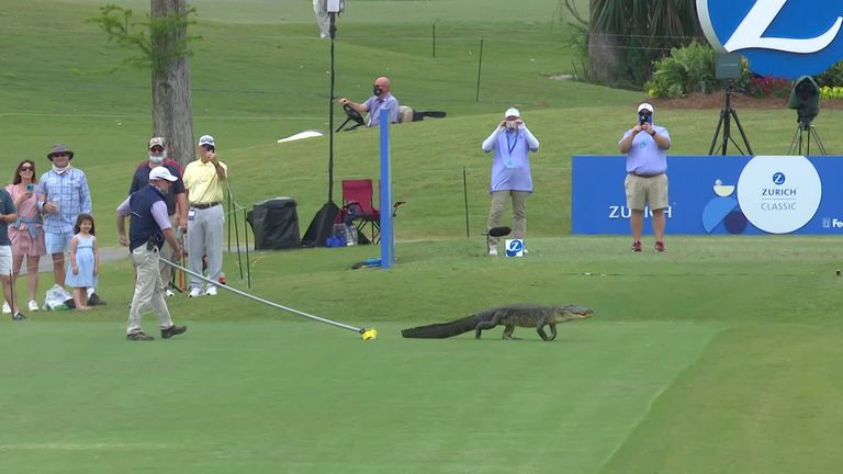 An alligator had to be given the brush off after paying an unwelcome visit to a tee during the second round of the Zurich Classic of New Orleans