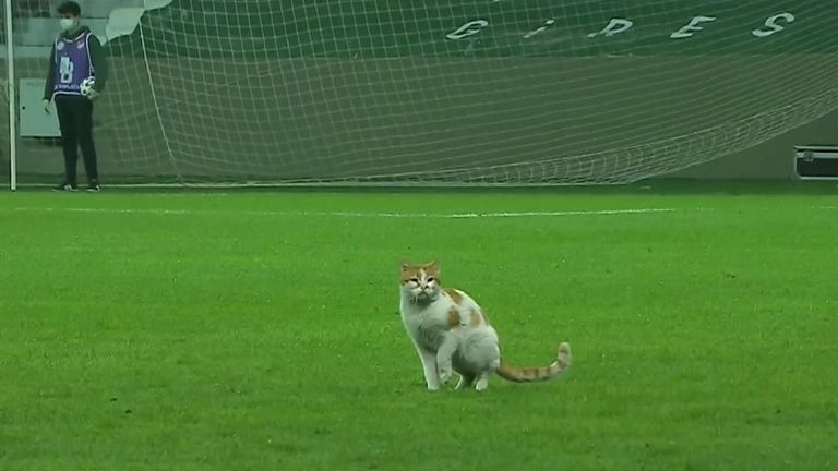 Cat invades pitch during football match