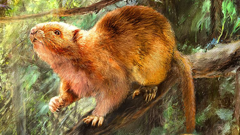 Undated handout image of an artist's impression showing what the three new species of fossil cloud rats might have looked like. Scientists have discovered three new species of giant cloud rats that were twice the size of a grey squirrel and roamed the planet tens of thousands of years ago. Issue date: Friday April 23, 2021.
