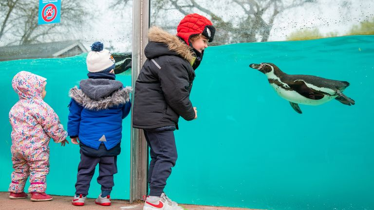 The always-popular penguins at London Zoo have an audience again