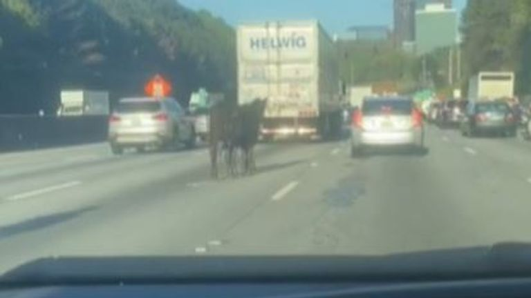 Cow joins traffic line in Georgia