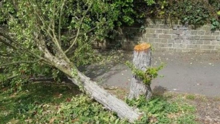 A mystery tree-feller is chain-sawing down trees under the cover of darkness in Weybridge in the borough of Elmbridge Photo: Elmbridge Beat/Surrey Police Twitter