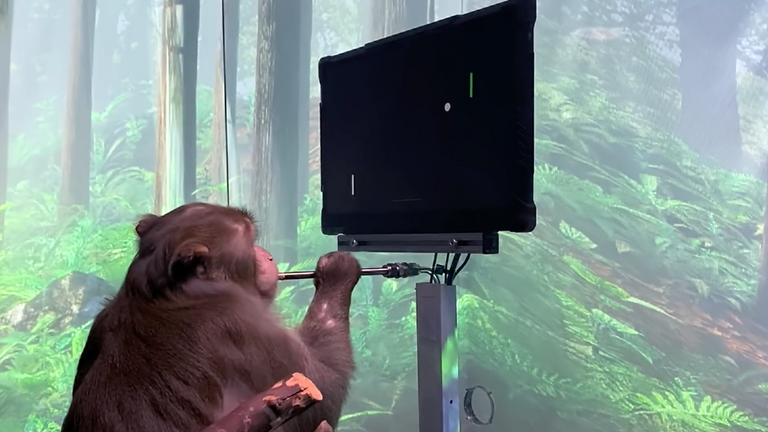 Neuralink has taught a monkey to play the video game Pong with its mind. Pic: Neuralink