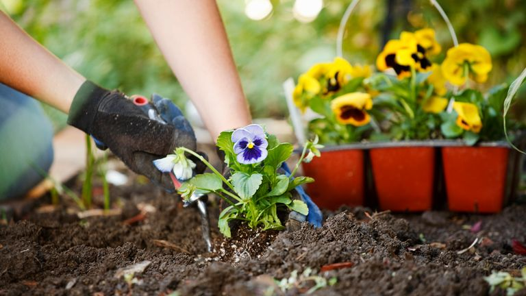 Gardening has been linked to improved wellbeing