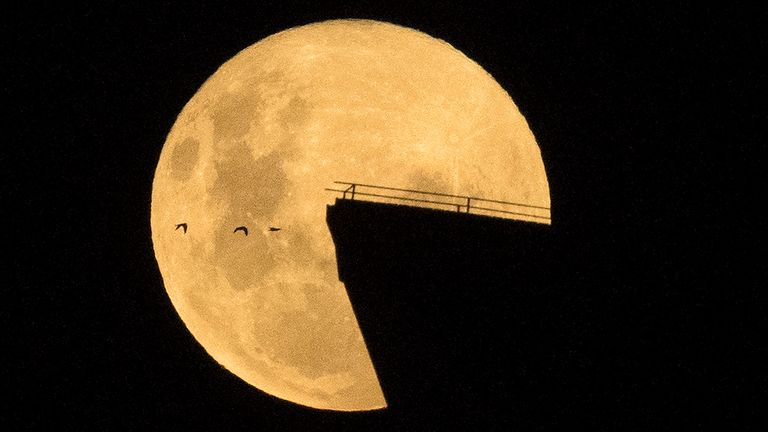 Birds fly by as the moon rises over the Opera House in Sydney. Pic: AP