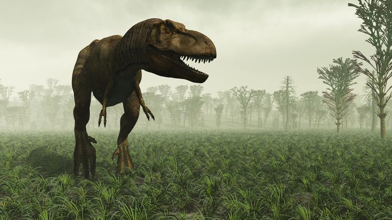 The T rex was able to chomp through bone because of a joint in its jaw found in modern reptiles