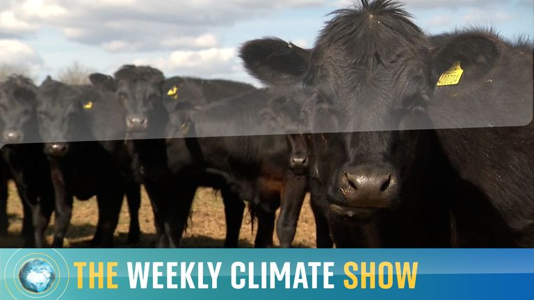 The Weekly Climate Show