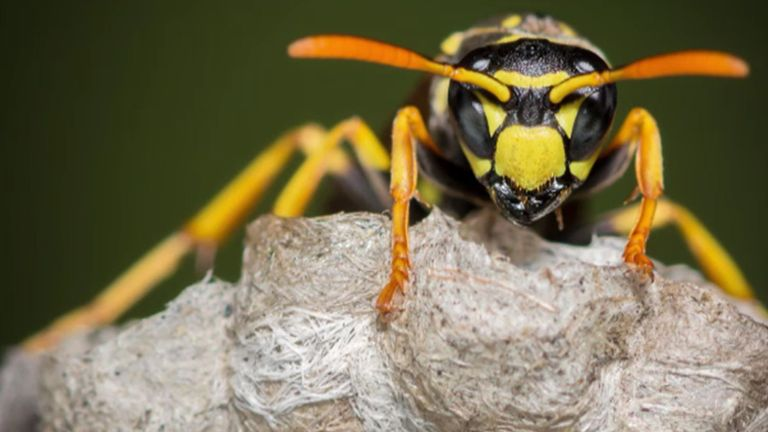 The World Wide Fund for Nature celebrates 60 years of conservation and we look at how peatlands could reduce flooding.