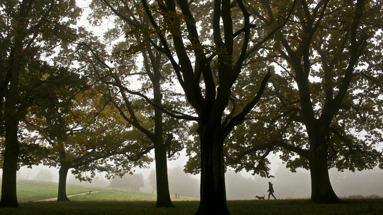 A woman walks her dog past trees bearing autumnal colors as they are shrouded in mist on Hampstead Heath, London, Tuesday, Oct. 23, 2012. (AP Photo/David Azia)