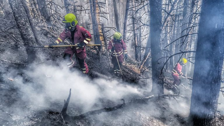 Fire and police services in South Wales are appealing to the public to help stop the wildfires