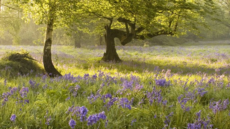 The report says nitrogen pollution is among the threats to the UK's woodlands