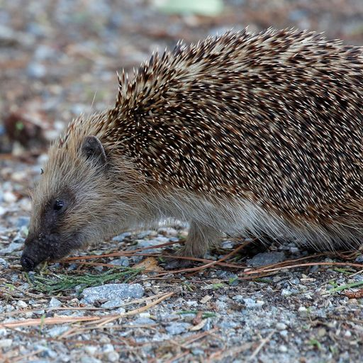 Hedgehog stoned to death among worst cases of rising wildlife abuse, RSPCA reports