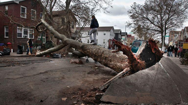 A girl plays on a fallen tree on Brighton 6th Street in the Brighton Beach area of Brooklyn in New York on Thursday, Nov. 1, 2012. (AP Photo/Bebeto Matthews)