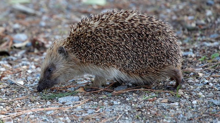THE DAILY CLIMATE SHOW TALKS HEDGEHOGS WITH BRIAN MAY