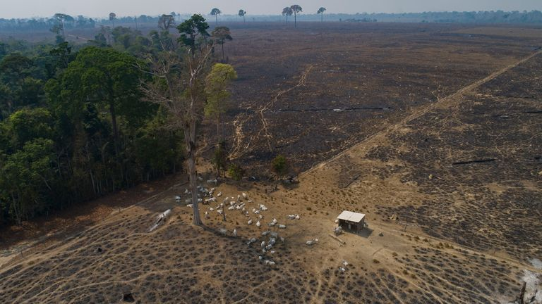 Conservationists warn the new law threatens to accelerate rainforest destruction. Pic: AP