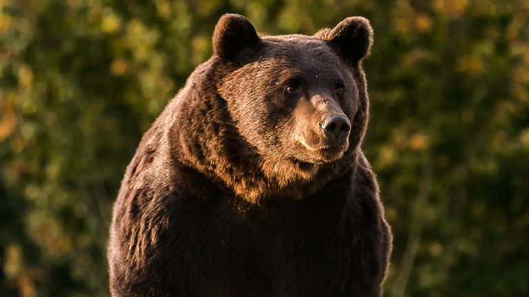 Prince Emanuel von und Zu is suspected of killing Romania's largest bear, Arthur. Pic AP