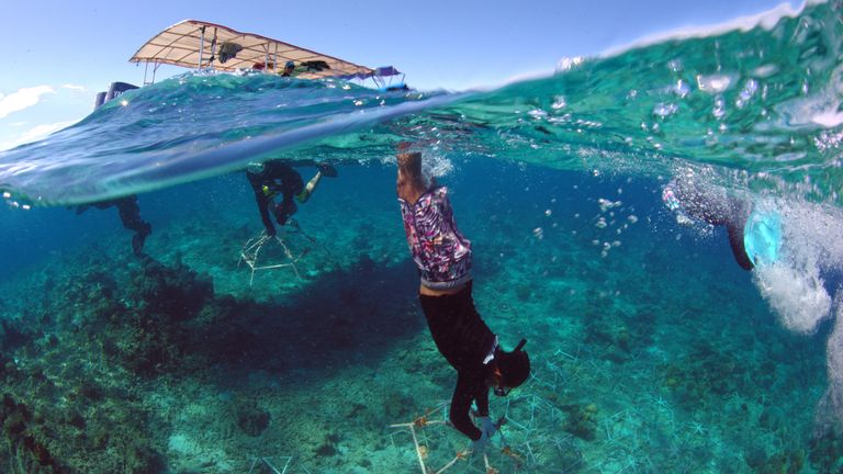 DIVER TAKING PART IN THE SHEBA HOPE REEF BUILD