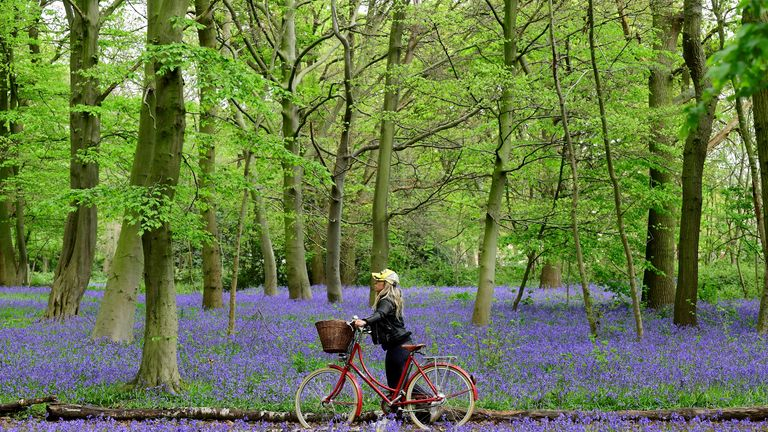 A woman with a bicycle is seen by bluebells in Epping Forest, Wanstead, as the spread of the coronavirus disease (COVID-19) continues, London, Britain, April 18, 2020