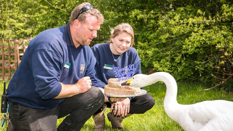 Pickles receives a special birthday cake from Leeds Castle. Pic: Leeds Castle