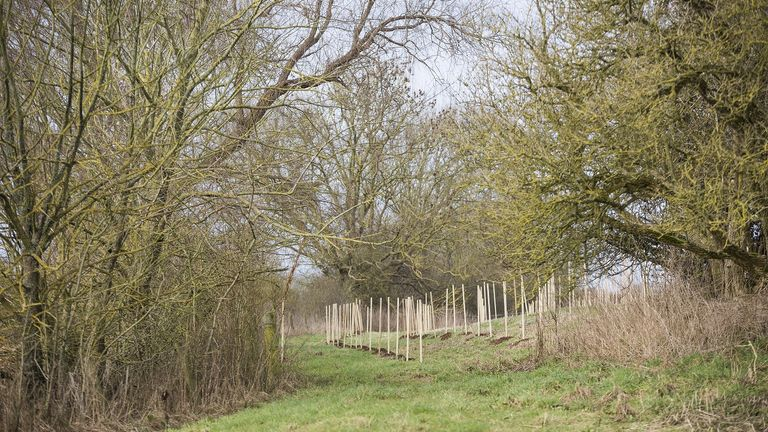 Thousands of trees will be planted as part of the project