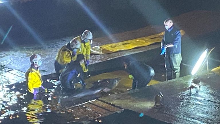 A whale is stranded at Richmond Lock. Pic: Lucia Binding