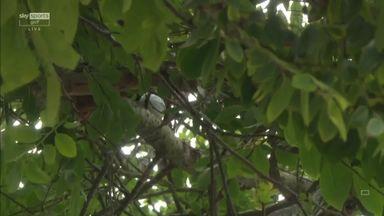 Hughes' tee shot bounces into a tree!