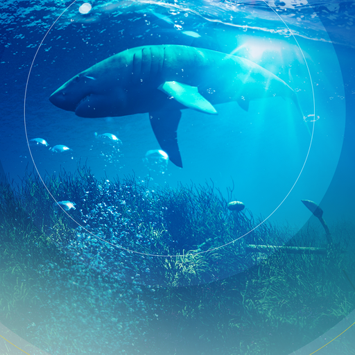 World Ocean Day: What is it, why does it matter and how to get involved?