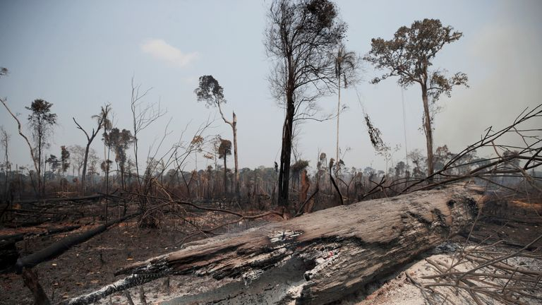 Charred tree trunks in an area burned by loggers and farmers