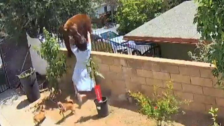 Woman battles bear in her backyard