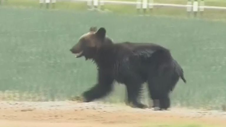 Bear is shot after going on rampage in japan