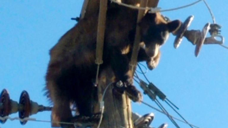 A bear is seen tangled in a power pole in Willcox, Ariz., on Monday, June 7, 2021 in this photo provided by Werner Neubauer. (Courtesy of Werner Neubauer via The AP)