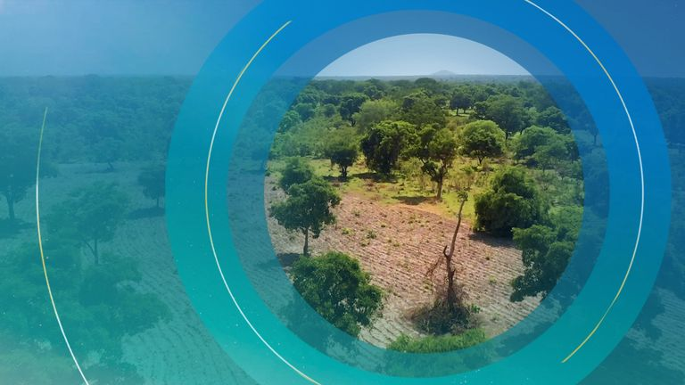 Tree Aid's Great Green Wall campaign in Africa's Sahel region aims to restore 5,000 miles of land.