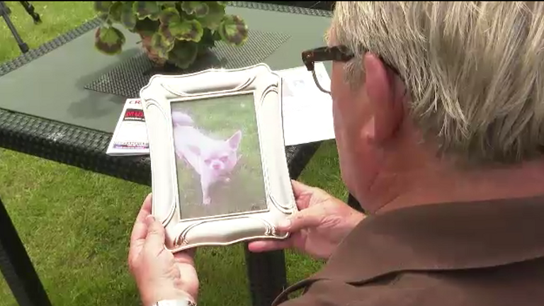Gerald McCarthy's dog Molly helped him cope with the sudden death of his wife