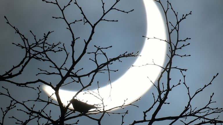 A bird rests on a branch as a partial solar eclipse is seen, near Bridgwater, in south western England, March 20, 2015. REUTERS/TOBY MELVILLE