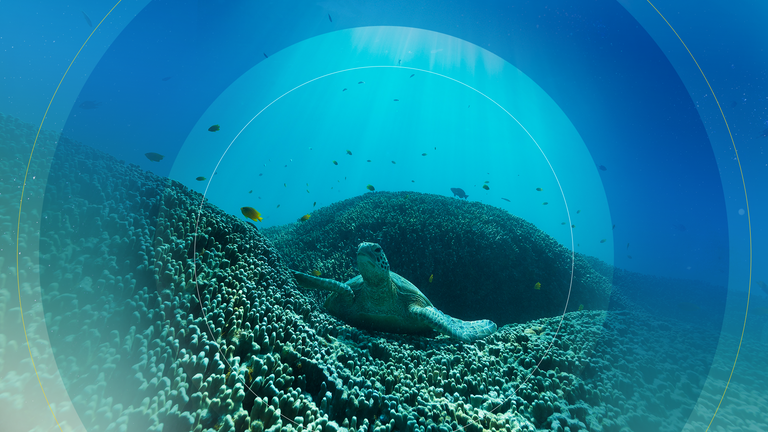 The world's oceans are home to most of the earth's biodiversity