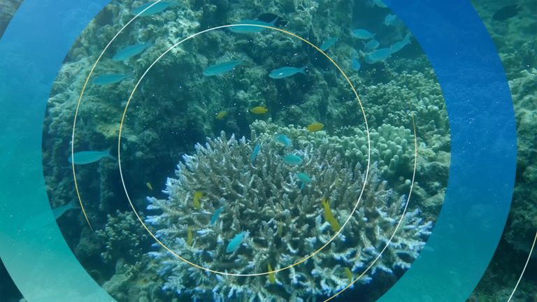 The Great Barrier Reef is on the World Heritage list