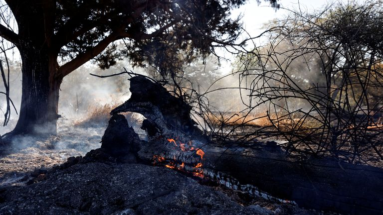 A tree in a field catches fire after Palestinians in Gaza sent incendiary balloons over the border between Gaza and Israel, Near Nir Am June 15,2021. REUTERS/Amir Cohen