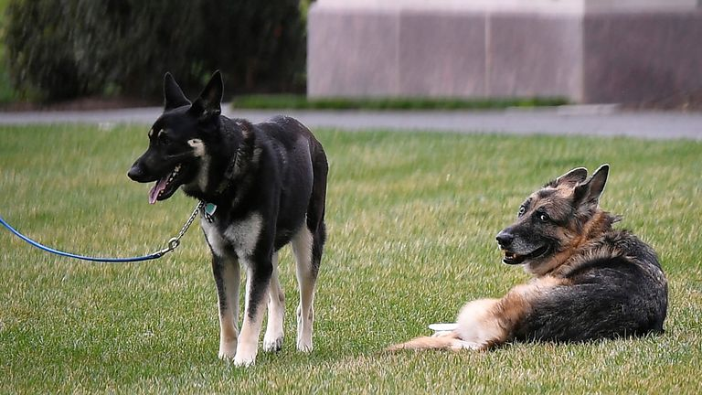 Champ (right) died after 13 years with the Biden family. Pic AP