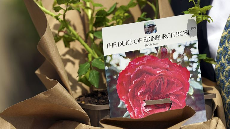 The newly bred deep pink commemorative rose from Harkness Roses has officially been named in memory of the Duke of Edinburgh