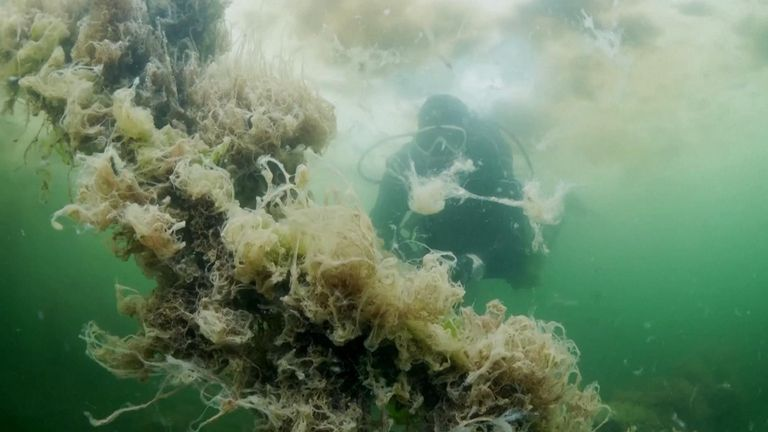 VIDEO SHOWS: UNDERWATER FOOTAGE OF LAYERS OF 'SEA SNOT' FLOATING ON SURFACE OF WATER, DOCUMENTARY FILMMAKER TAHSIN CEYLAN DIVING INTO WATER, 'SEA SNOT' IN SEA WATER