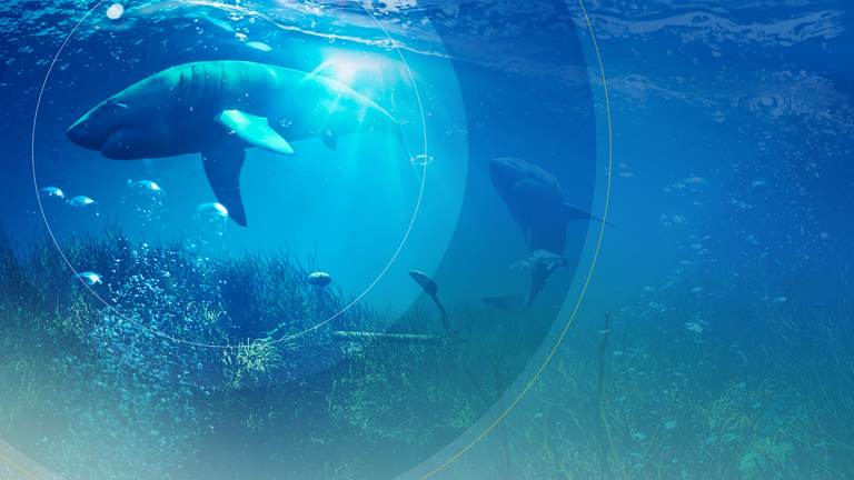 World Ocean Day is celebrated on 8 June