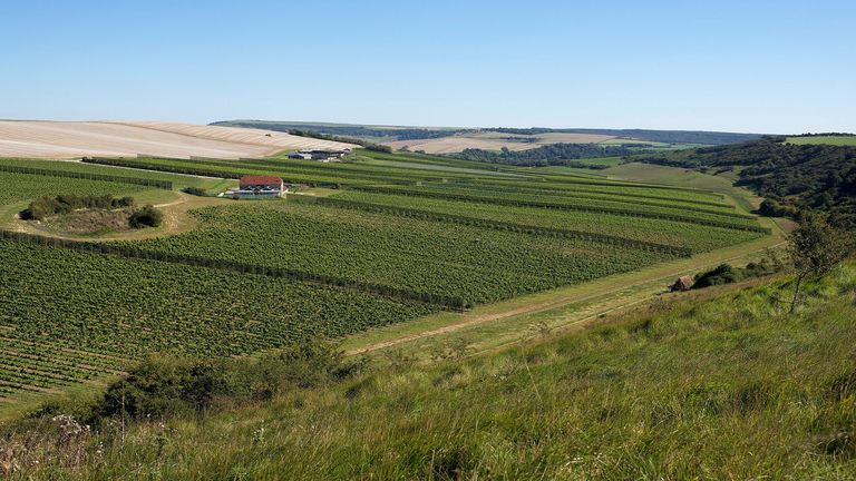 Investing in vineyards and winemaking in the South Downes could create hundreds of jobs