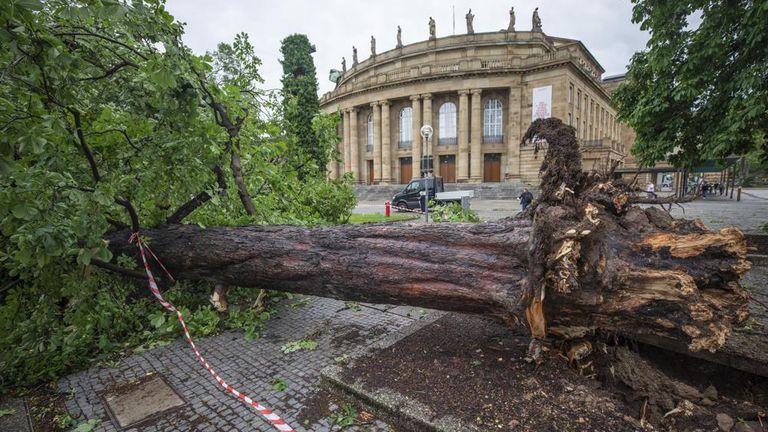 A fallen tree lies in front of the opera house in Stuttgart. Pic: Christoph Schmidt/dpa via AP