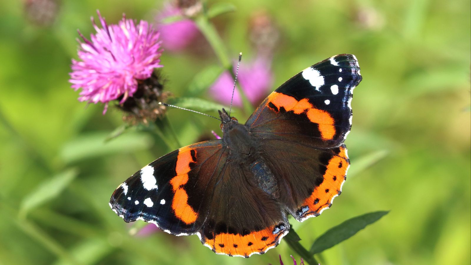 Climate change crisis: Britons urged to count butterflies amid fears cold and wet spring has hit UK numbers