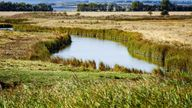 The Swale National Nature Reserve on the Isle of Sheppey in Kent, England