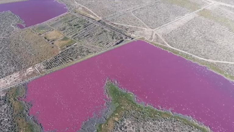 A lake in Argentina has turned bright pink with local environmentalists blaming pollution.