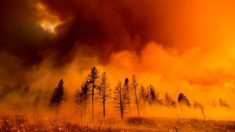 Smoke envelops trees as the Sugar Fire, part of the Beckwourth Complex Fire, burns in Doyle, California