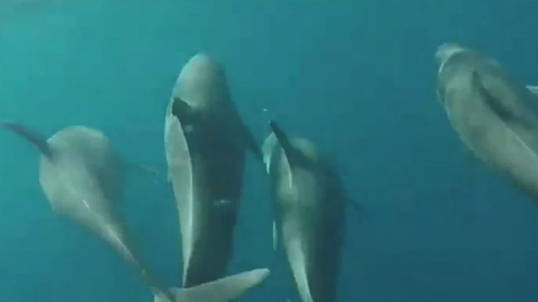 Dolphins filmed off bow of a ship in Florida